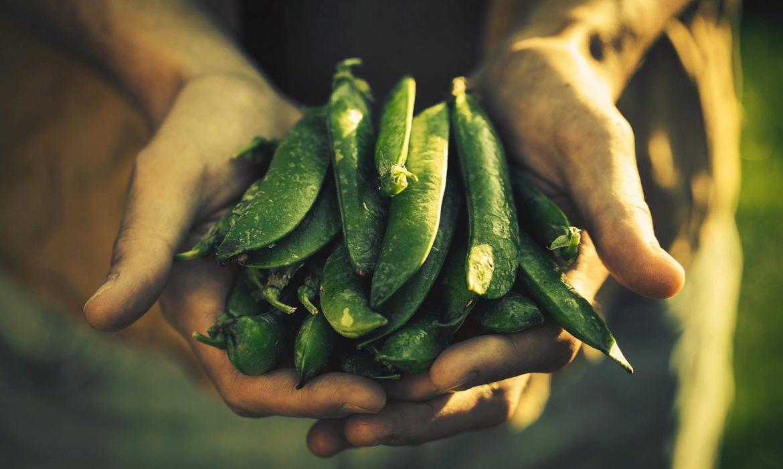 Baljväxter kan hjälpa dig som behöver gå ned i vikt